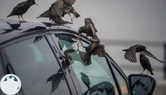 Как уберечь автомобиль от птиц