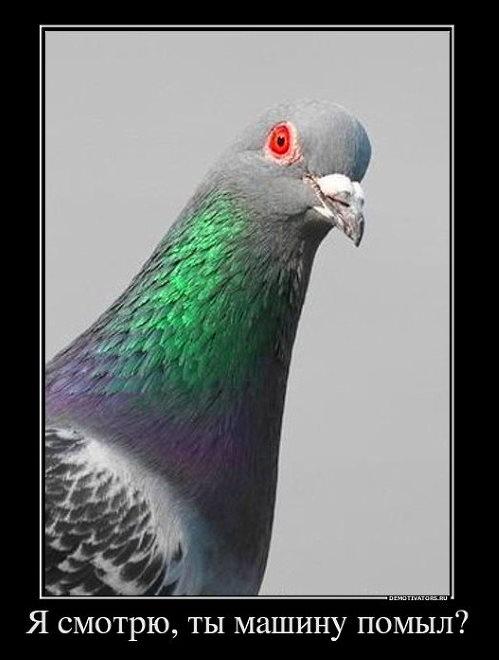 что сделать чтобы птицы не садились на машину