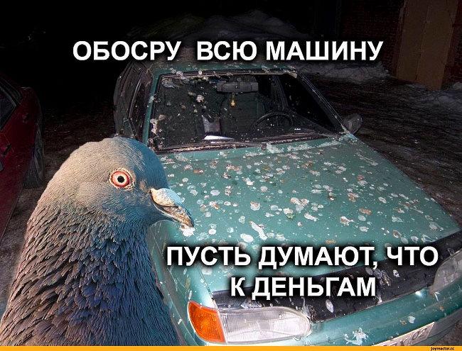 как защитить машину от птиц