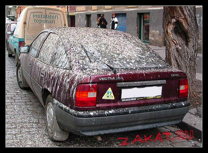 защитить машину от помета птиц