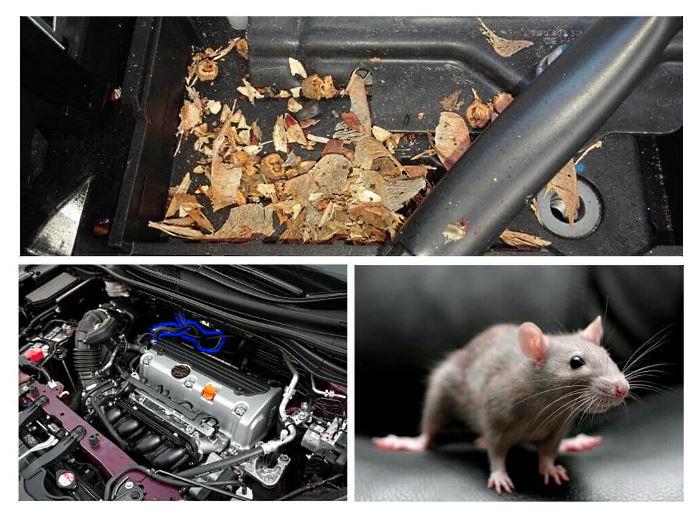 Крысы и мыши грызут провода в авто